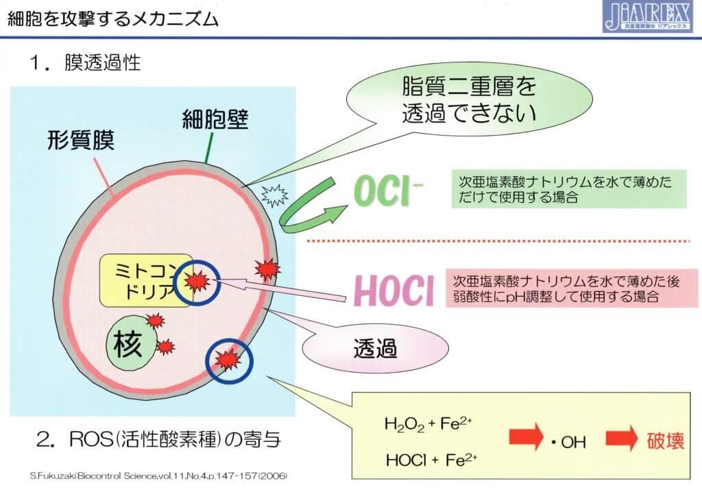 細胞を攻撃するメカニズム